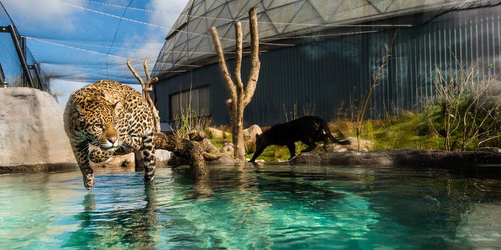 Alla djur på Randers Regnskov vandrar inte omkring fritt. Och tur är väl det.