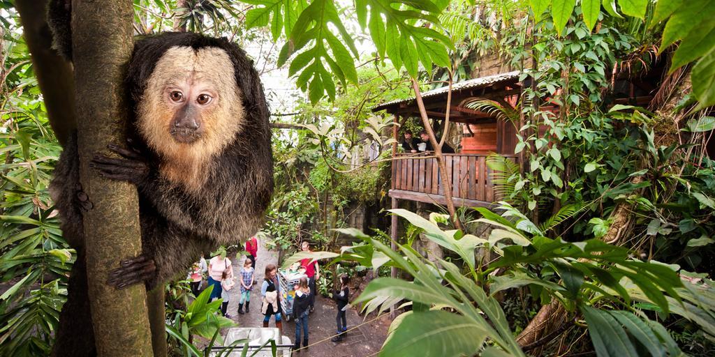 Under tre olika kupoler kan du på det tropiska zoot Randers Regnskov gå omkring bland djur från tre olika kontinenter. Foto: Randers Regnskov