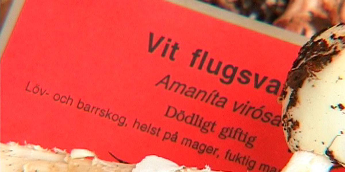 gift datum muntligt med kondom i Stockholm